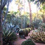 jardin majorelle foto 2