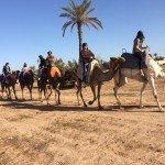 passeio camelo  foto 1